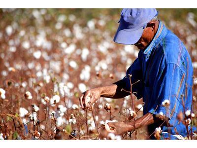 Grupo adidas supera meta de uso de algodão sustentável em 2014
