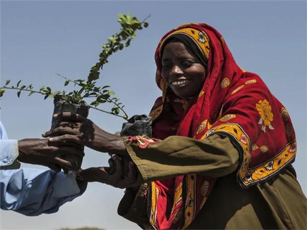 COP 21: The Great Green Wall project