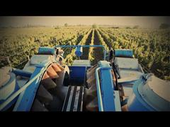 New Holland's Braud Grape Harvesters Working in the Vineyards of Mendoza, Argentina