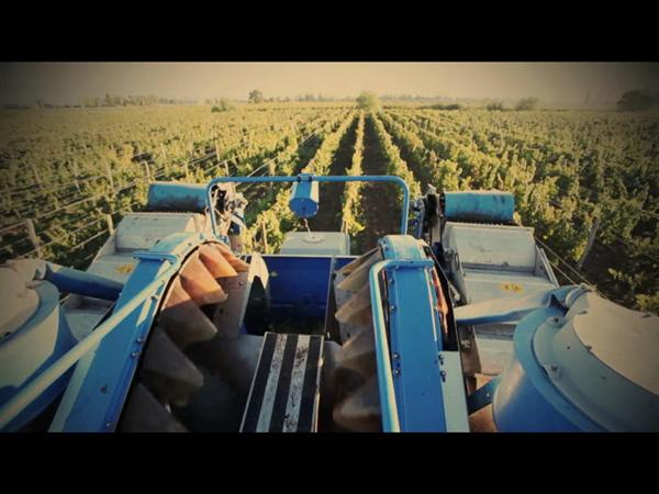 Line of Braud grape harvesters working in the vineyards of Mendoza, Argentina.