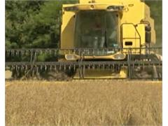 The Future of Farming Relies on Youngsters' Involvement, According to MEPs
