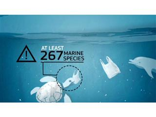 No more Plastic Bags in our Woods and Seas