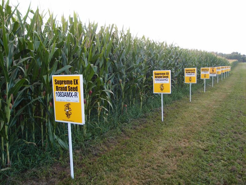 GMO field