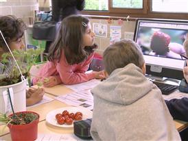 Nourriture saine à l'école: les eurodéputés votent pour la distribution gratuite de fruits, légumes et lait à l'école