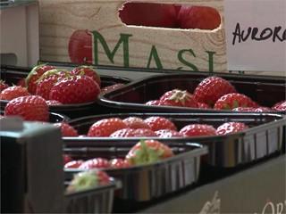 More fruit, vegetables and milk for 30 million European school children (EN/FR)