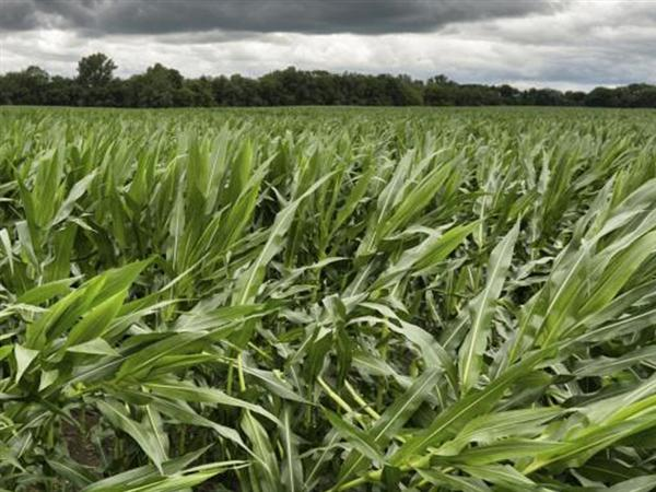 MEPs support member states' right to ban GMOs