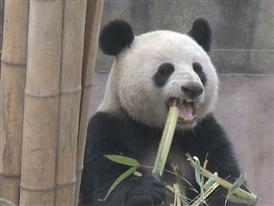 FedEx Panda Express Leaving Ceremony