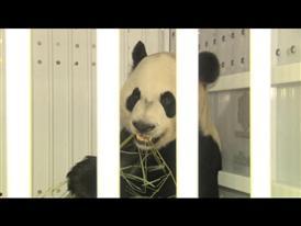 shipping panda to airplane