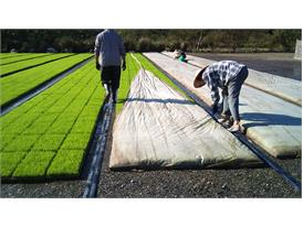 Taiwanese farmers use nonwoven sheets to protect produces