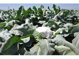 Nonwoven products in a farmland