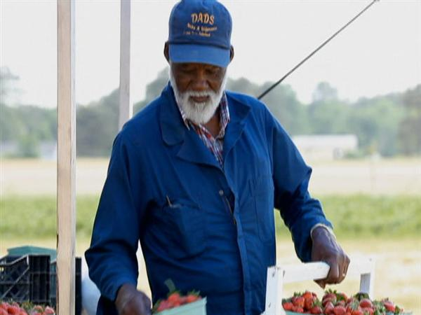 Farmer Selling Produce Crops