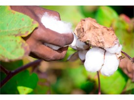 Cotton from more sustainable sources