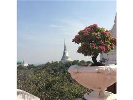 In den Bergen zwischen Hau Hin und Burma liegt das bekannteste Weinbaugebiet Thailands