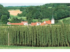 Hops growing Bayern