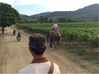 Wein aus dem Monsoon Valley in Thailand