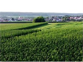 Typical Bavarian hop growing area, landscape shots
