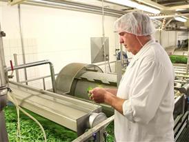 Produktion - Waschstrasse mit Spinat