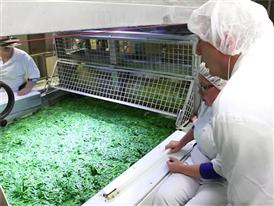 Produktion - Spinatverarbeitung