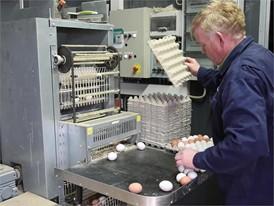 Hühnereier - Transport vom Stall zur Sortierung