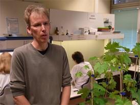 Dr. Andreas Kortekamp, DLR Rheinpfalz, Institut für Photomedizin - 03