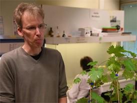 Dr. Andreas Kortekamp, DLR Rheinpfalz, Institut für Photomedizin - 06