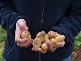 Interview Katja Zehfuss FCN 10 Kartoffeln in der Hand