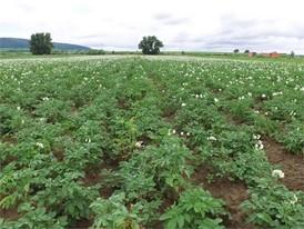 Bio-Kartoffelbauern in der Pfalz drohen 100 % Ernteausfall - Film ohne Titel und Bauchbinden Clean