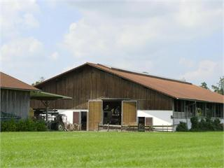 Stress im Kuh-Stall - Mit Pedometer und High-Tech gegen die Sommerhitze