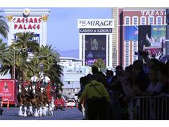 Budweiser Clydesdales Trot Down Las Vegas Strip