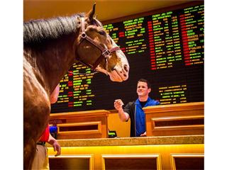 Budweiser Clydesdale Heads to South Point Hotel, Casino & Spa sports book