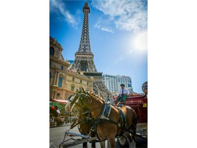 Budweiser Clydesdales on Las Vegas Strip