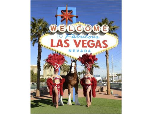 Las Vegas Welcomes Budweiser Clydesdales
