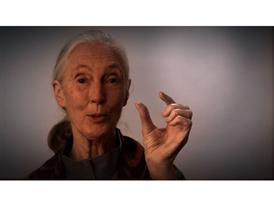 This Close - Jane Goodall