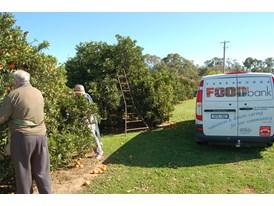 Foodbank picking fruit