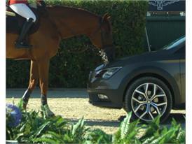 HD video Horse against Leon