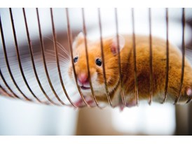 Charlie, the hamster in his specially designed tread mill.
