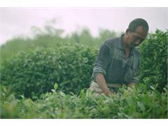 Taobao Originals: Efuton Tea