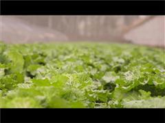 Taobao Originals: Rainbow Rain Organic Farm