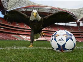 BENFICA EAGLE IMAGE 1