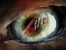 Predator Instinct