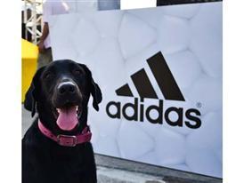 adidas Boost Endless Run 39