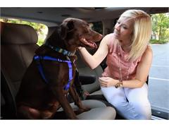 Don't Drag Your Tail When It Comes to Your Pets' Safety
