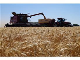Harvesting Camp Spain