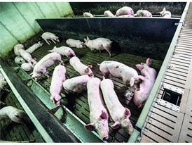 Liquid slurry, such as that from pigs, can be fed into the biodigester to generate biogas