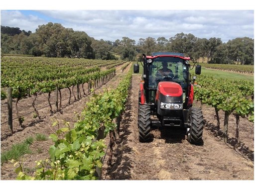 Farmall C working in a vineyard