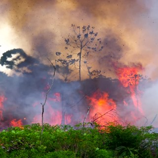 Use international agreements to pressure Brazil on Amazon fires