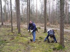 GLS-Mitarbeiter pflanzten Bäume im Staatswald