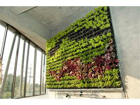Trash For Trees Vertical Garden