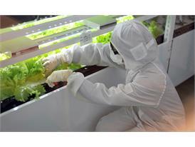 Harvesting fresh vegetables