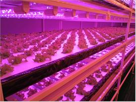 Plants under controlled environment to ensure steady flow in quality and quantity